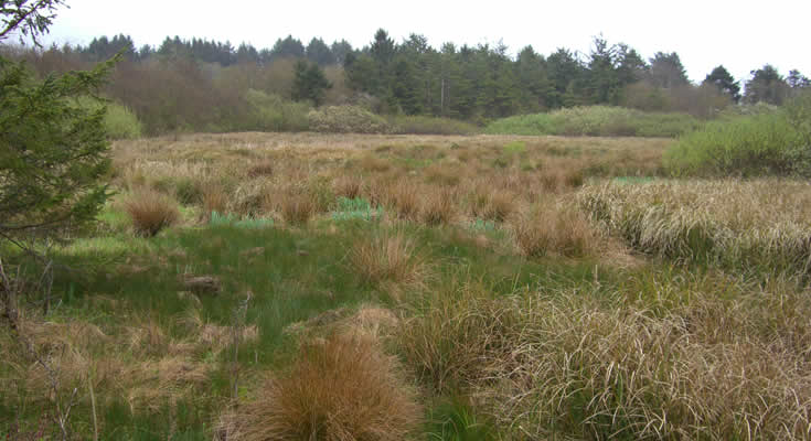 Little Pompey Wetland Restoration: Project photo 1